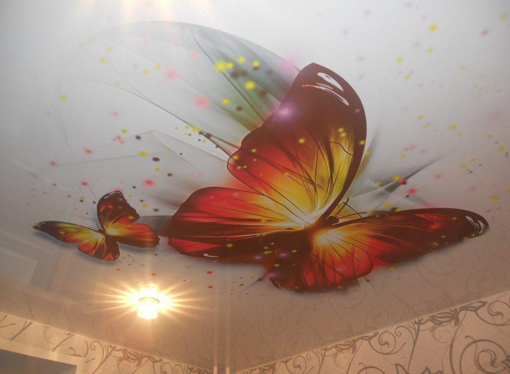 картинка на натяжном потолке бабочка